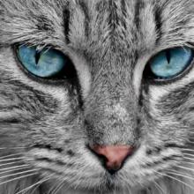 عکس نقاشی گربه سفید کیفیت بالا